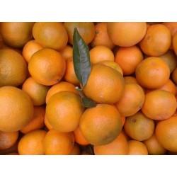 Mandarina del Ebro ECO de 1a calidad
