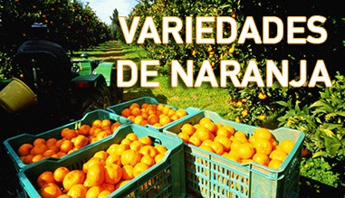 variedades naranja